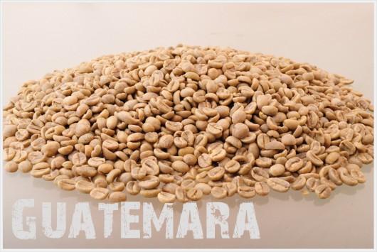 グアテマラ コーヒー生豆