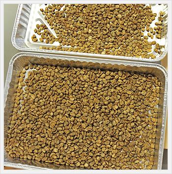 マンデリン生豆