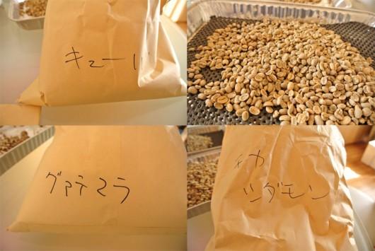珈琲生豆のハンドピッキング