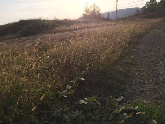 綾川自転車道脇道