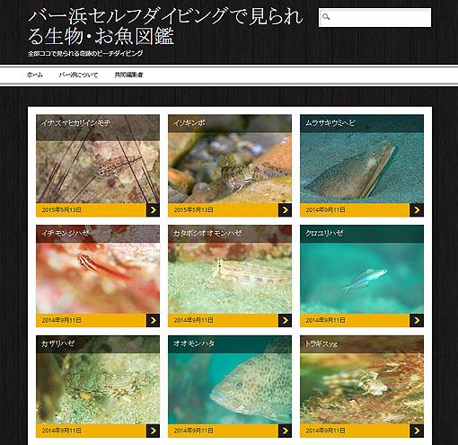 バー浜セルフダイビングで見られる生物・お魚図鑑