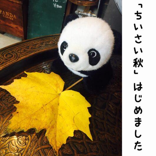 パンダと紅葉した葉の画像
